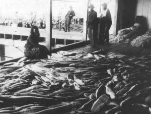 Salmon lie on the floor of a cannery. Four workers observe.
