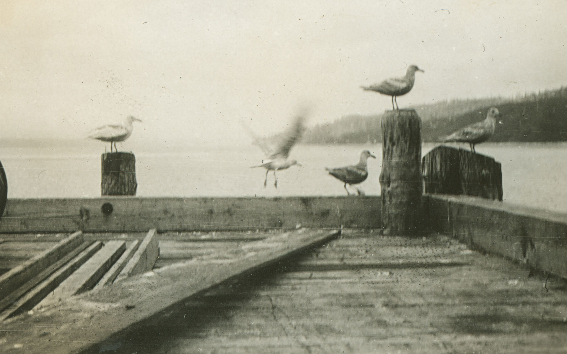 The end of a wooden dock with seagulls perched on the pilings